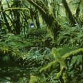 Ambush, 2001,  on linen, 31 x 51cm